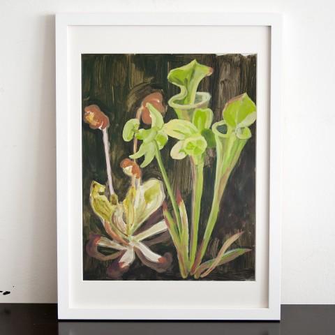 Moorpflanzen